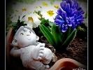 Der kleine Fritz im Blumenkasten