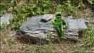 Kermit aus der Sesamstrasse