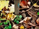 Noch zeigt sich der Herbst