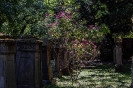 Die Natur ist immer noch der beste Friedhofsgärtner