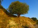 Boltenhagen Baum Steilküste