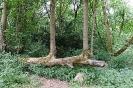 Die Natur hilft sich selbst. Im Park Beeltz Nähe Berlin