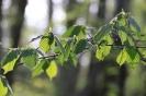 Tanzende Blätter im Licht