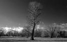Zwischen den  hinteren Bäumen ist eine Senke...dort haben sich heute die Tiere vor dem Sturm verkrochen.