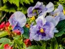 Blüten und Farben
