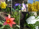 Blumen-Collage