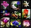 Bunte Frühlingsvielfalt