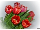 Hol` dir den Frühling ins Haus