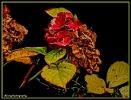 Hortensien im herbstlichen Gewand