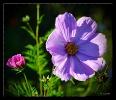 Sommerblümchen