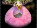 Last Blumen sprechen