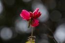 An einem wilden Rosenstrauch