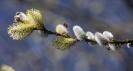 Der Frühling ist nicht mehr zu übersehen