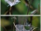 Herbstliche Pflanze