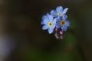 Kleine Frühlingsboten