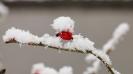 Lustig was so aus Pflanze und Schnee entsteht