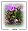Orchideen  sind immer