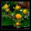 Regenperlen auf der noch jungen Pflanze