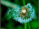 Wenn Pollen verreisen *grins*