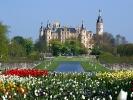 Tulpen, nicht in Holland