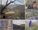 Ein Nachmittag auf der Alb - es ist noch karg dort aber erste Frühlingsanzeichen gibt es doch