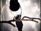 Vogel im Gegenlicht