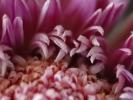 Welkende Blüte