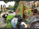 Tiere aus dem Zoo Grömitz