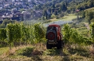 Auch im  Weinbau kann man auf Spritzmittel