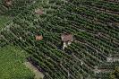 Diese Weingärten wurden zwischen