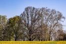 Jetzt werden auch die Wiesen gelb
