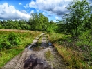 ein Weg ins Wittmoor