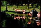 Bei den Flamingos im Krefelder Zoo