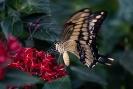 Der flatterte nur um die roten Blüten herum