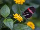 In der Schmetterlingshalle