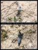 Plattbauch Libelle