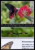 Schmetterlinge eben...