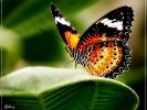 Schmetterlingshaus Krefelder Zoo