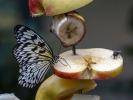 So eine Apfelscheibe