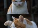 Bauernhof-Katze