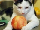 mein Apfel