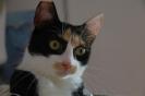 Mira - eine von 2 neuen Mitbewohnern hier