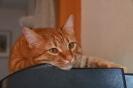 Mr. Namenlos alias Rambo alias Picasso - der neue Mitbewohner des Hauses, manchmal lieb manchmal bissig...