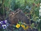Osterhase war bei uns im Blumenbeet
