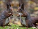 Auch Eichhörnchen