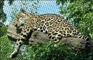 Auch ein Jaguar muß auftanken, damit