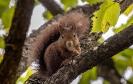 Auf dem Nussbaum sitzend hat sie den Rest vertilgt...