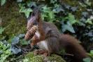 Das ist ein noch junges Hörnchen