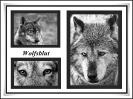 Dem Wolf in die Augen geschaut