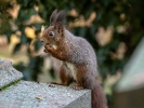 Demente Eichhörnchen...